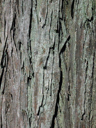 Bark Texture stock photo,  by Rhys Marsh