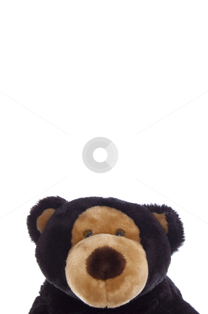 Teddy bear, cropped stock photo, Cuddly teddy bear, cropped with copy-space, isolated on white. by Jeff Carson