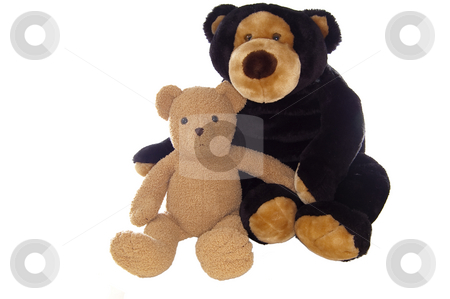 Teddy bear friends, sitting stock photo, Two teddy bears, sitting, isolated on white. by Jeff Carson