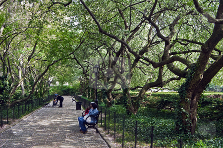 New York Central Park  stock photo, A tangle of trees over a quiet walk offers a shady respite from New York's busy streets by Bart Everett