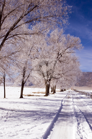 Deep Springs Road stock photo, Snow covers a rural road and dusts trees in California mountains by Bart Everett