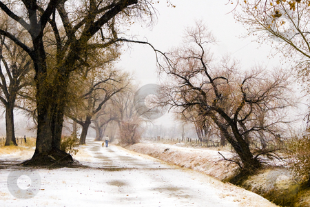 Snowy Dog Walk stock photo, Man walks his dog as snow falls along a road in California's Owens Valley by Bart Everett