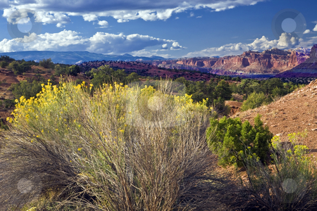 Capitol Reef Bluff stock photo, Bluffs lie beyond desert foliage in Capitol Reef National Park. by Bart Everett
