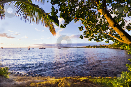 Maui Coast at Lahaina stock photo, Tree branches and palm fronds overhang the calm sea as boats lie at anchor in the distance. by Bart Everett