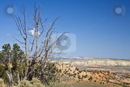 Escalante Barren Tree stock photo, Barren tree overlooks desert bluffs in Grand Staircase-Escalante National Monument, Utah by Bart Everett