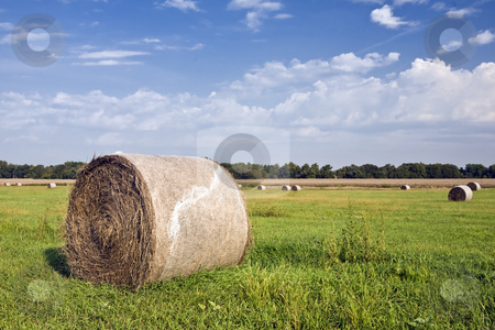 Hay Bales Shrink-Wrapped stock photo, New baling machines are making square bales a thing of the past. by Bart Everett