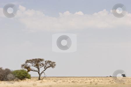 Vast Plains stock photo, Etosha National Park, Republic of Namibia, Southern Africa by mdphot