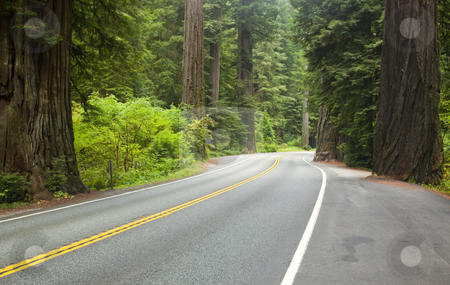 Redwood Highway stock photo, The Redwood Highway winding through Redwood National Park by Mike Dawson