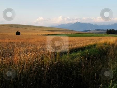 Fields, meadows and mountains stock photo, Fields, meadow and mountains in morning light landscape by Juraj Kovacik