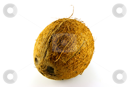 Coconut stock photo, Single whole brown coconut on a white background by Keith Wilson
