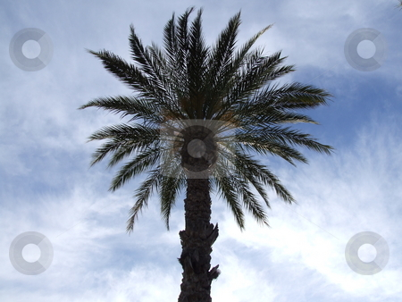Palm Trees with Cloud Background stock photo, Palm Trees with Cloud Background by Stephen Lambourne