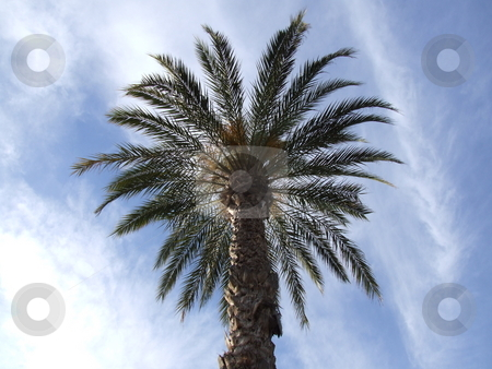Palm Trees with a Sun Background stock photo, Palm Trees with a Sun Background by Stephen Lambourne