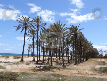 Palm Trees Blue Sky and Beach Landscape stock photo, Palm Trees Blue Sky and Beach Landscape by Stephen Lambourne