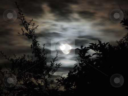 Full Moon behind Tree stock photo, Full Moon behind Tree by Stephen Lambourne