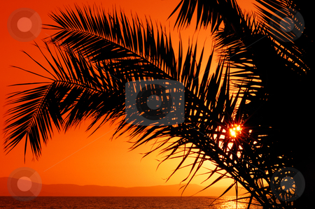 Palm tree during sunset stock photo, Picture of a setting sun partially hidden by a palm tree branch by Andreas Karelias