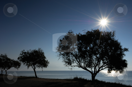 Backlit trees on the shore stock photo, Backlit picture of trees on the beach, captured right after sunrise by Andreas Karelias