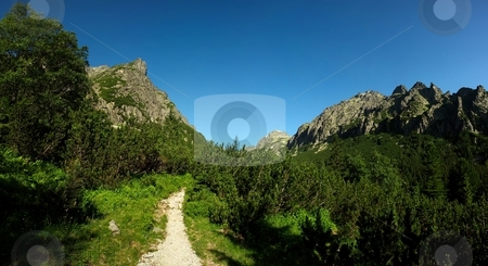Walking path in mountains stock photo, Walking path in mountains with green knee timber and blue sky by Juraj Kovacik