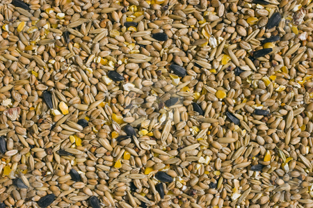 Bird Seed stock photo, Close up of assorted types of bird seed by Stephen Meese