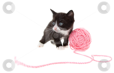 Kitten with string stock photo, Five week old kitten playing with a ball of string by Steve Mcsweeny