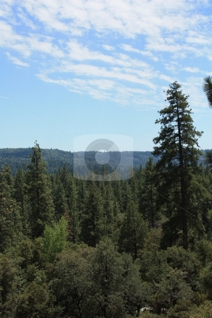Green forest with blue sky and white clouds stock photo, Forest and sky by Gregory Dean