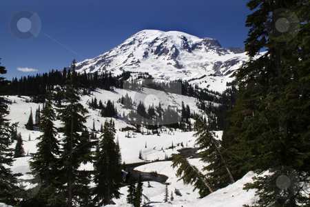 Mount Rainier, Snowy Paradise, June stock photo, Mount Rainier National Park, Paradise Valley, snowy, in June on a clear day by William Perry