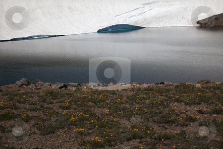 Yellow Wildflowers Frozen Lake Reflection Mount Rainier Sunrise  stock photo, Yellow Wildflowers Frozen Lake Reflection Mount Rainier Sunrise  Snow Mountain by William Perry
