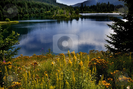 Gold Lake Snoqualme Pass Washington stock photo, Landscape of Gold Lake, Snoqualme Pass, Washington.  Yellow Flowers, blue lake with reflections of clouds by William Perry