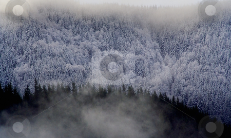Snow in Trees in Mountain stock photo, Snow in Trees in Mountain by William Perry