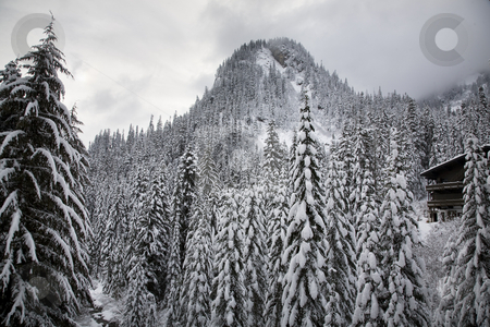 Snow Trees Mountain Ski Lodge Alpental Washington stock photo, Snow Covered Trees Mountain, Ski Lodge, Alpental, Snoqualme Pass, Washington by William Perry