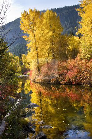 Fall Colors Log  Wenatchee River Stevens Pass Leavenworth Washin stock photo, Fall Colors Wenatchee River Log Stevens Pass Leavenworth Washington by William Perry