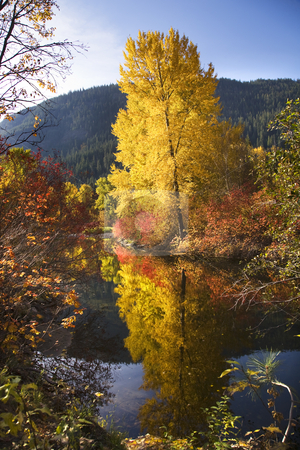 Fall Colors Wenatchee River Stevens Pass Leavenworth Washington stock photo, Fall Colors Wenatchee River Stevens Pass Leavenworth Washington by William Perry