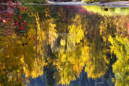 Fall Colors Wenatchee River Relections Forest Stevens Pass Leave stock photo, Fall Colors Wenatchee River Reflections Yellow Trees Stevens Pass Leavenworth Washington, October 10, 2008 by William Perry