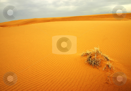 Sandy desert stock photo, Iran natures by Ali Shokri