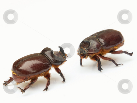 Clash of titans stock photo, Titans clash in the world of insects and bugs. Isolated on a white background. by Sinisa Botas