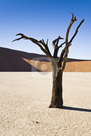 Dry Planet stock photo, Dead Vlei, Namib Desert, Namib-Naukluft National Park, Republic of Namibia, Southern Africa by mdphot