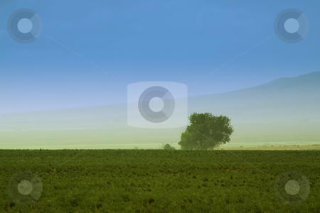 Tree behind a farm stock photo, A Tree behind a farm in rural Utah by Mehmet Dilsiz