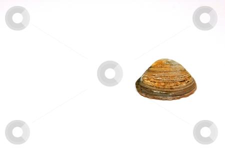 The Seashell stock photo, Seashell Solo by Mehmet Dilsiz