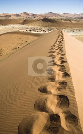 Footprints stock photo, My footprints on a huge dune, Sossusvlei, Namib Desert, Namib-Naukluft National Park, Republic of Namibia, Southern Africa by mdphot