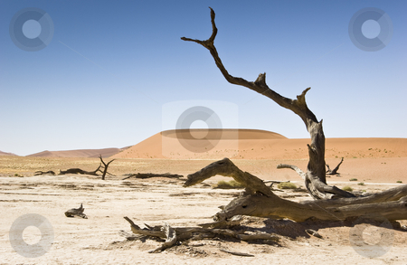 Dead Tree and Dune stock photo, Sossusvlei, Namib Desert, Namib-Naukluft National Park, Republic of Namibia, Southern Africa by mdphot