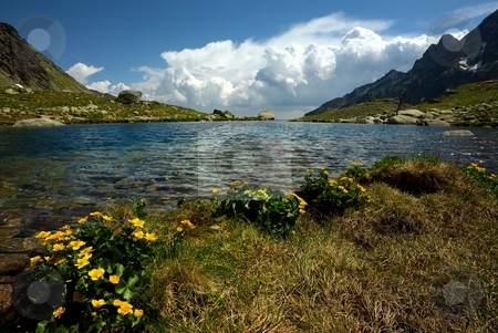 Mountain lake horizon with yellow flowers stock photo, Mountain lake on plateau with lower detail of yellow flower in sunny day with some clouds by Juraj Kovacik