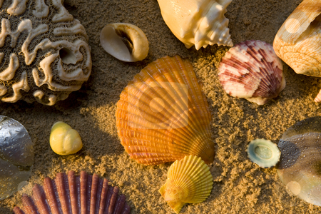 Sea Shells stock photo, A collection of sea shells on a sandy beach by James Barber
