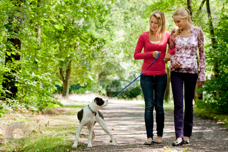 Walking with the dog stock photo, Two blond girls and a american bulldog in the park by Frenk and Danielle Kaufmann