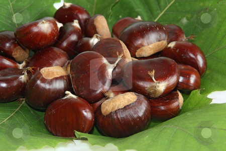 Chestnuts stock photo, Gruop of chestnuts the symbol of autumn with green leaves by ANTONIO SCARPI