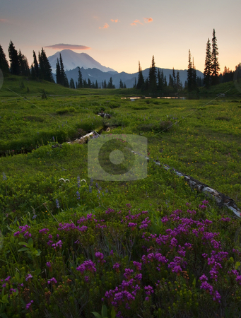 Mountain Heather Sunset stock photo, Mountain Heather and a bit of lupine dot an alpine meadow as the sun sets over Mt. Rainier by Mike Dawson