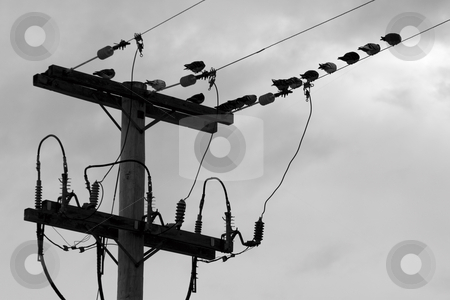 Pidgeon on wire stock photo, Flock of pidgeon braving the weather on eletrical pole by Yann Poirier