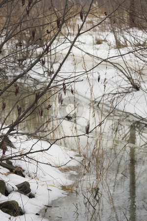 Thawing forest stock photo, Thawing forest with small river by Yann Poirier