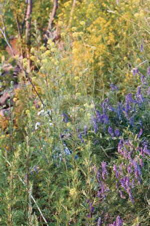 Field flower sunrise stock photo, Field of flower at sunrise by Yann Poirier