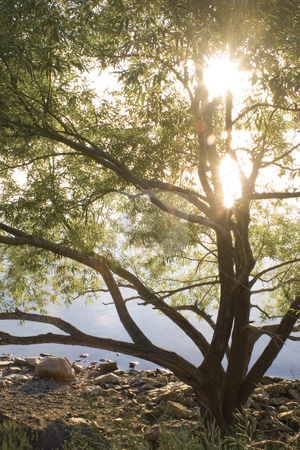 Sunshine tree stock photo, Tree on shore line with morning sun rising throught it's branch by Yann Poirier