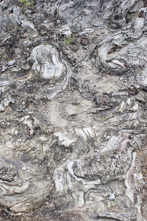 Tree bark stock photo, Close-up of tree bark texture by Yann Poirier
