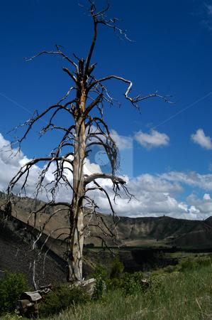 Struck by Lightning stock photo, USA, Idaho, Elmore County, Dead Burnt Tree by David Ryan
